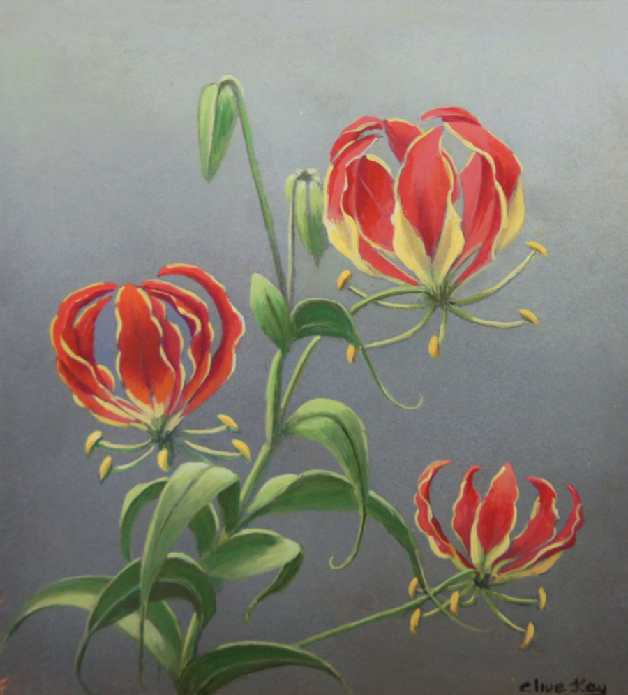 FLAME LILY #2